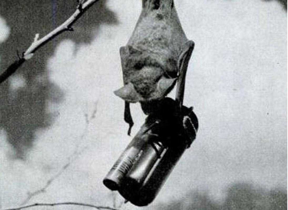 Giai ma du an bom doi tuyet mat cua My trong The chien II-Hinh-10