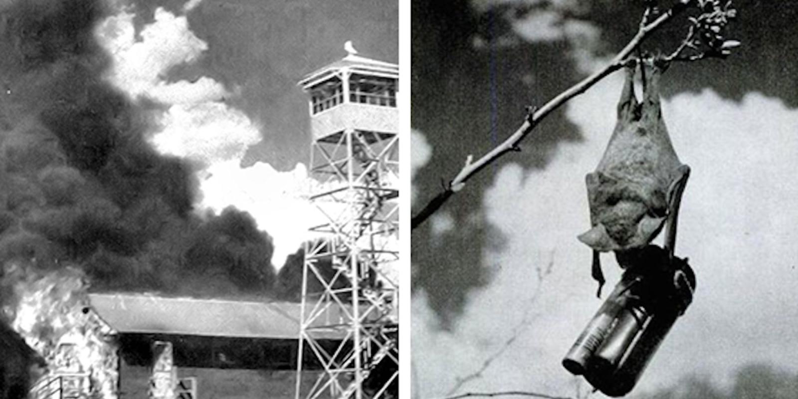 Giai ma du an bom doi tuyet mat cua My trong The chien II-Hinh-4