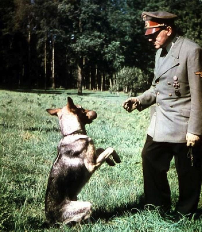 Ket cuc cua thu cung duoc trum phat xit Hitler yeu thich-Hinh-5