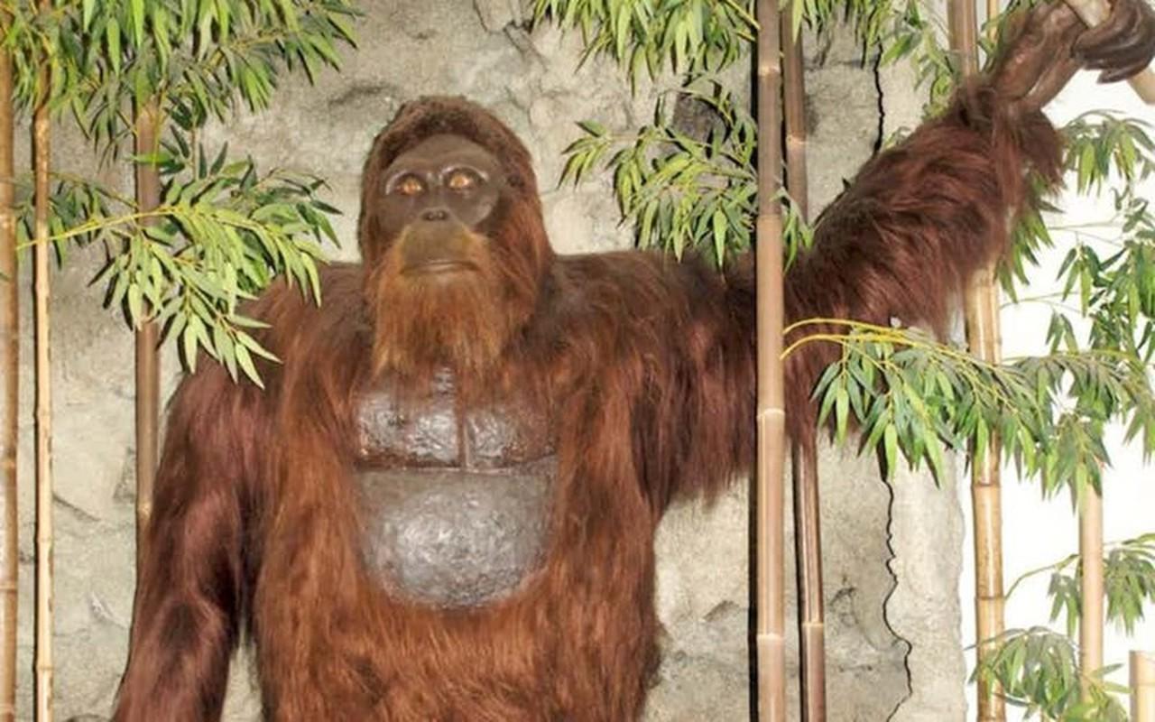 Vi sao con nguoi kho bat duoc quai vat Bigfoot?-Hinh-5