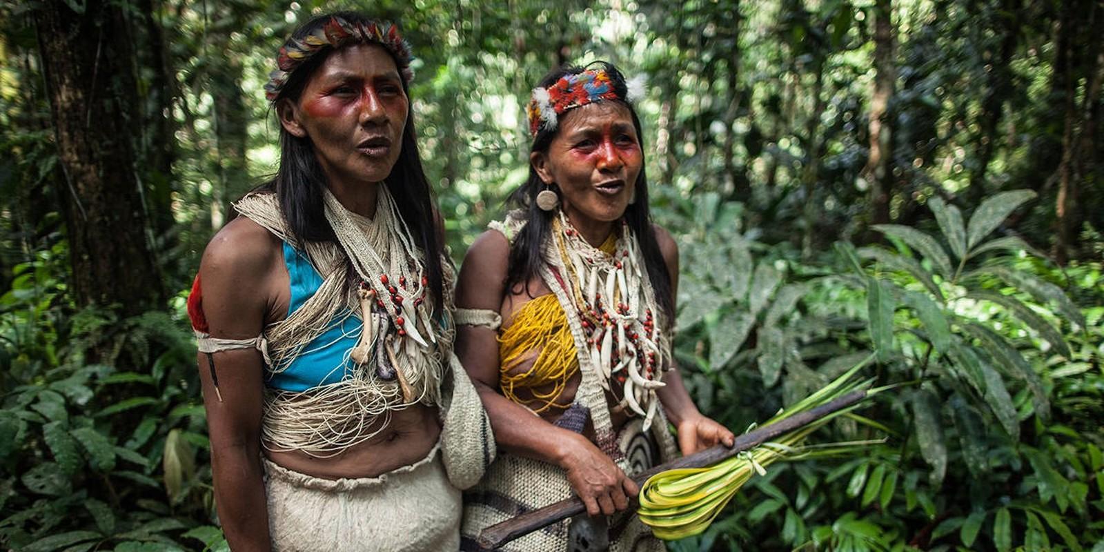 Dieu bat ngo ve khu rung nhiet doi Amazon noi tieng the gioi-Hinh-10