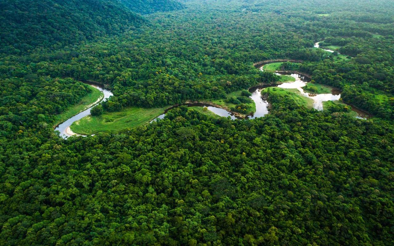 Dieu bat ngo ve khu rung nhiet doi Amazon noi tieng the gioi-Hinh-3