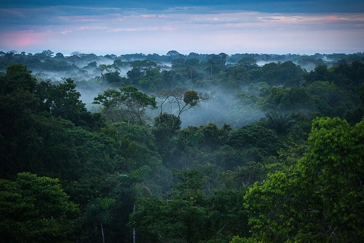 Dieu bat ngo ve khu rung nhiet doi Amazon noi tieng the gioi-Hinh-6