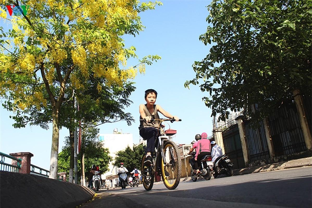 Muong hoang yen ruc vang goi he sang giua Ha Noi-Hinh-9