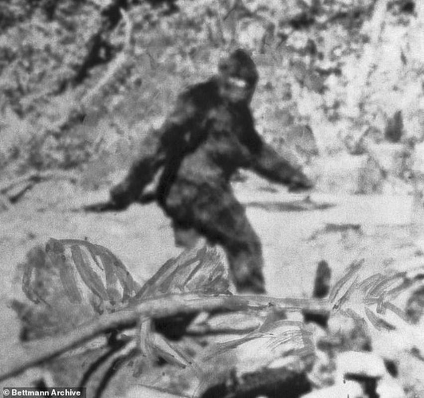Doan video ve sinh vat la nghi la quai vat bi an Bigfoot-Hinh-8
