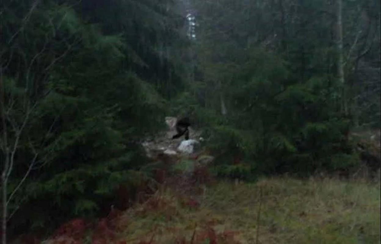 """Bi an quai thu Bigfoot xuat hien """"dinh dam"""" o Pennsylvania nam 1980-Hinh-8"""