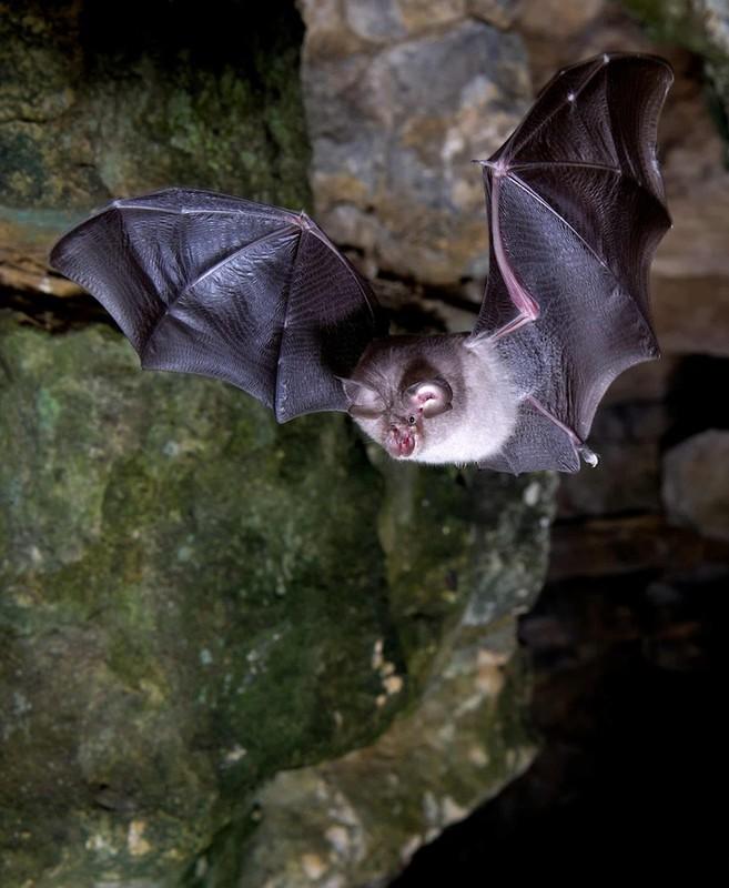 Bat ngo loai thu co he gene giong nguoi den 99%-Hinh-2