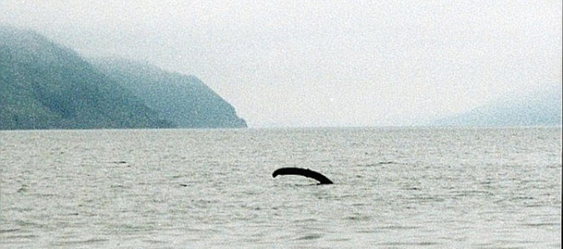 Cuc nong: Su that ve quai vat ho Loch Ness da duoc phoi bay?-Hinh-5