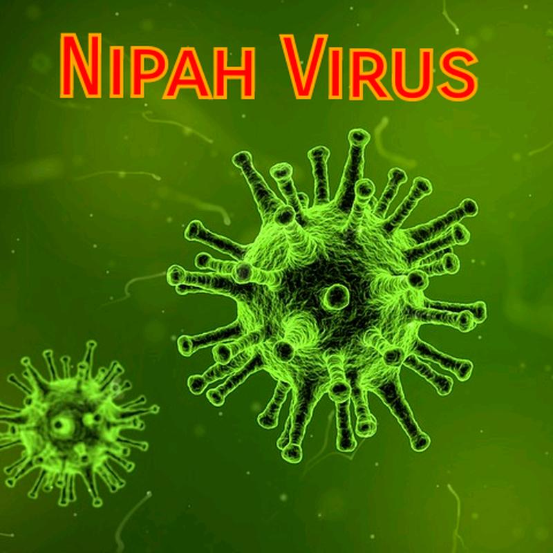 Virus Nipah bung phat: Nguy hiem hon