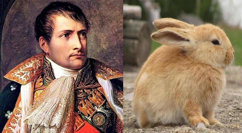 Bach chien bach thang, vi sao Napoleon