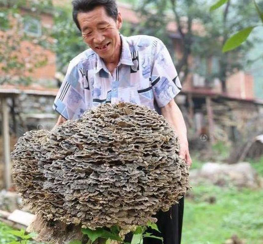"""Di hai thuoc, lao nong Trung Quoc tim thay """"bau vat"""" troi ban-Hinh-2"""