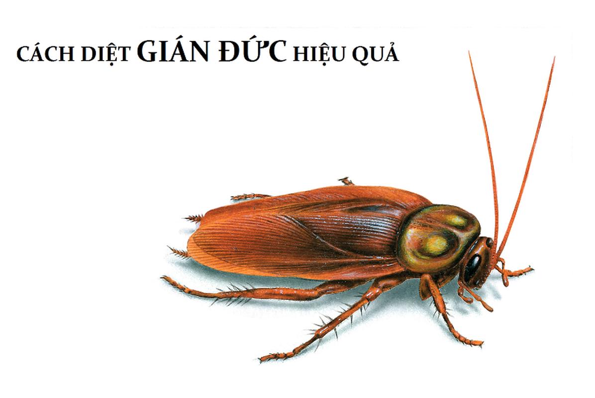 Su that kinh hoang ve gian Duc dang hoanh hanh khap noi-Hinh-10