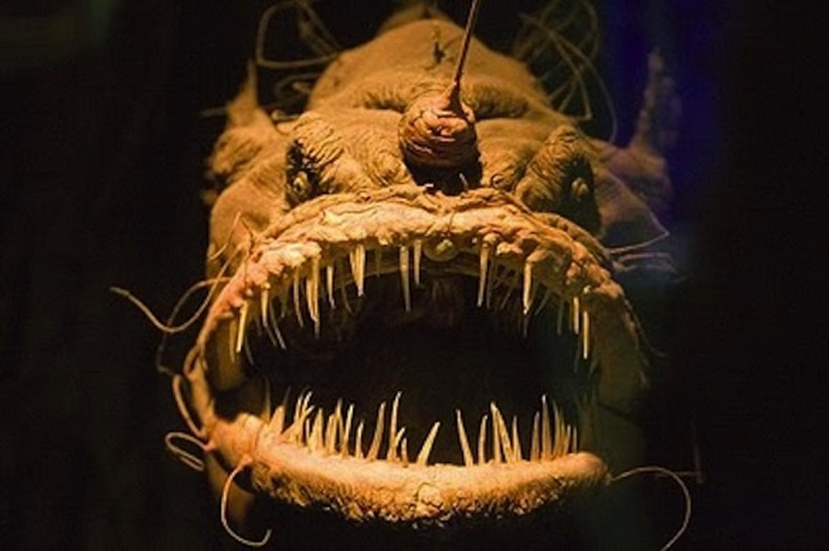 Kieu san moi khiep dam cua ca quy duoi day dai duong Anglerfish-Hinh-2