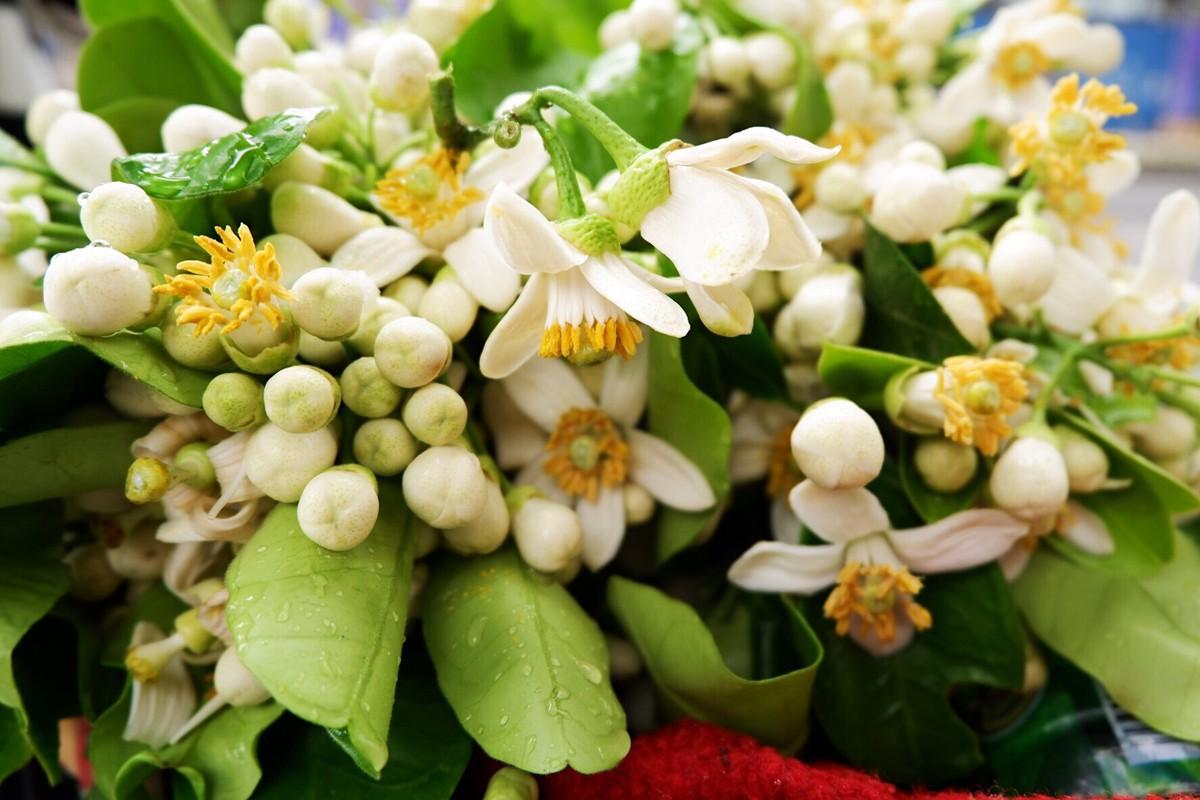 Nhung cong dung tuyet voi cua hoa buoi khong phai ai cung biet-Hinh-13