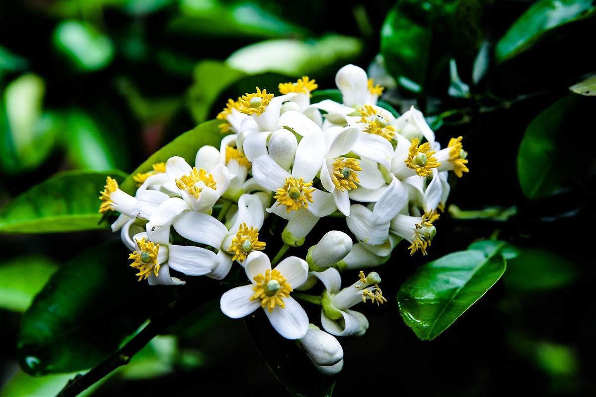Nhung cong dung tuyet voi cua hoa buoi khong phai ai cung biet-Hinh-5