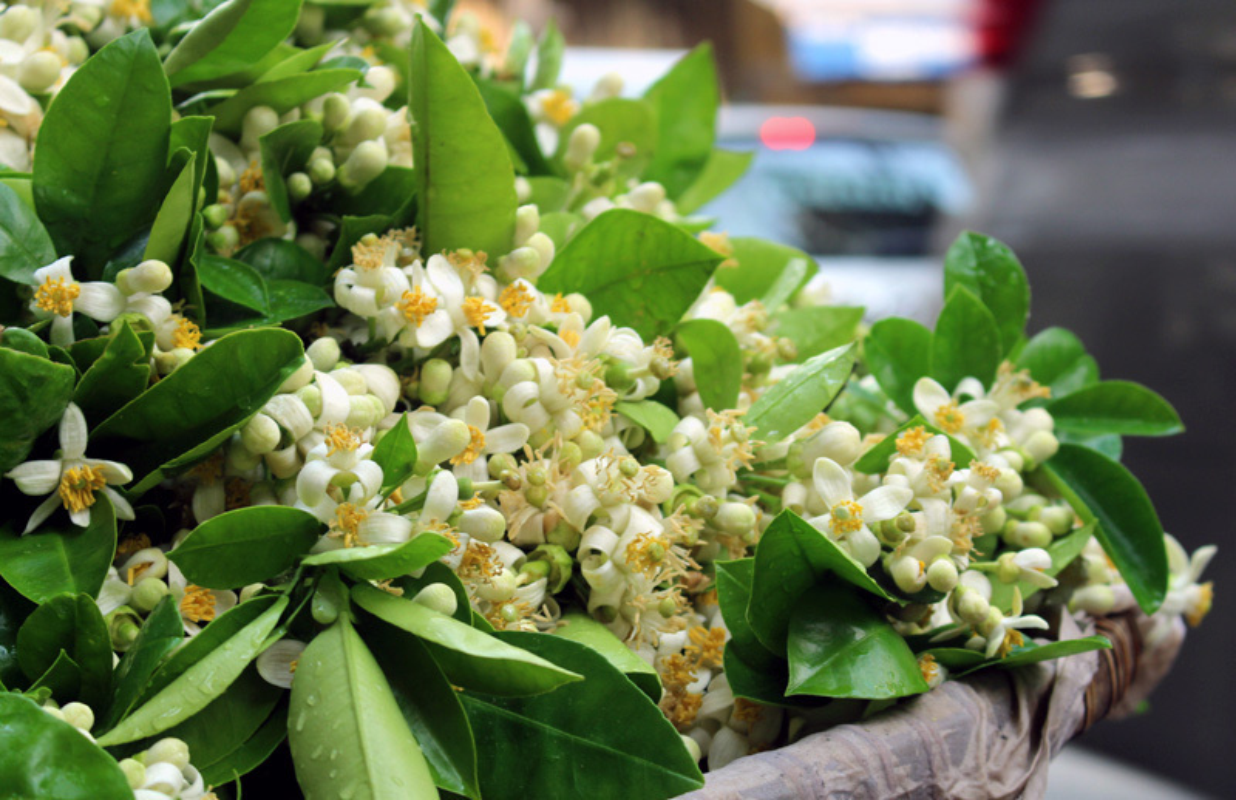 Nhung cong dung tuyet voi cua hoa buoi khong phai ai cung biet-Hinh-6