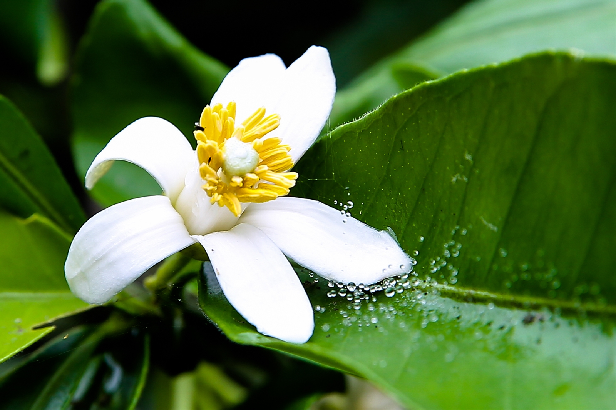 Nhung cong dung tuyet voi cua hoa buoi khong phai ai cung biet