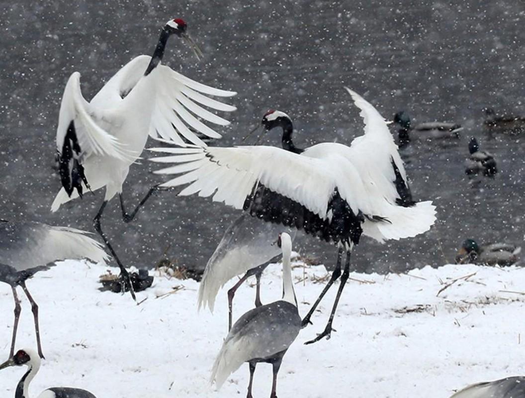 Nhung loai chim bay cao khong tuong khien con nguoi