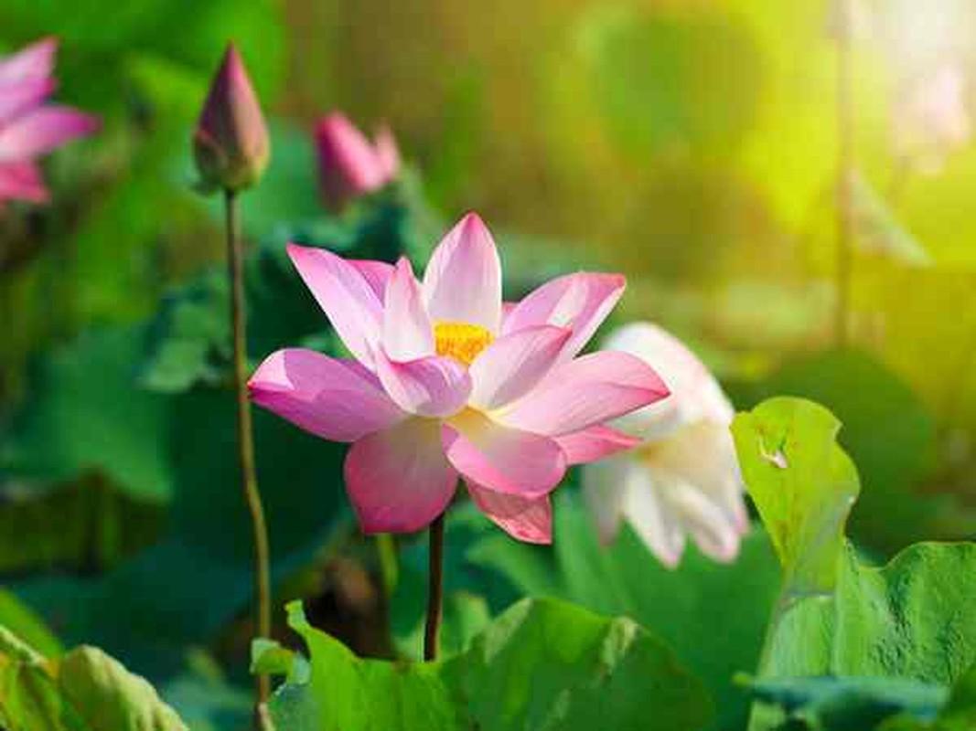 4 giac mo mang toi tien vang, bao hieu Than Tai sap phat loc-Hinh-8