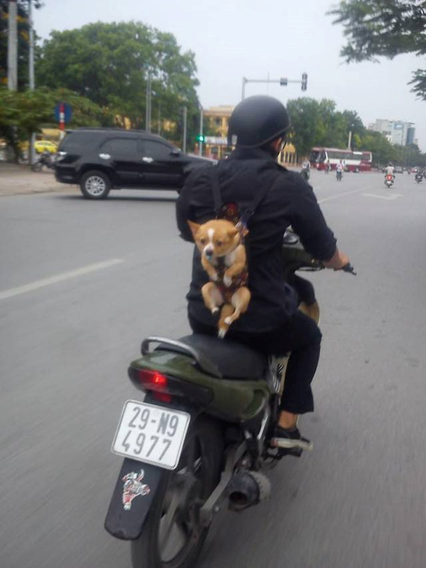 Anh: Khoanh khac an tuong giao thong Viet Nam-Hinh-13