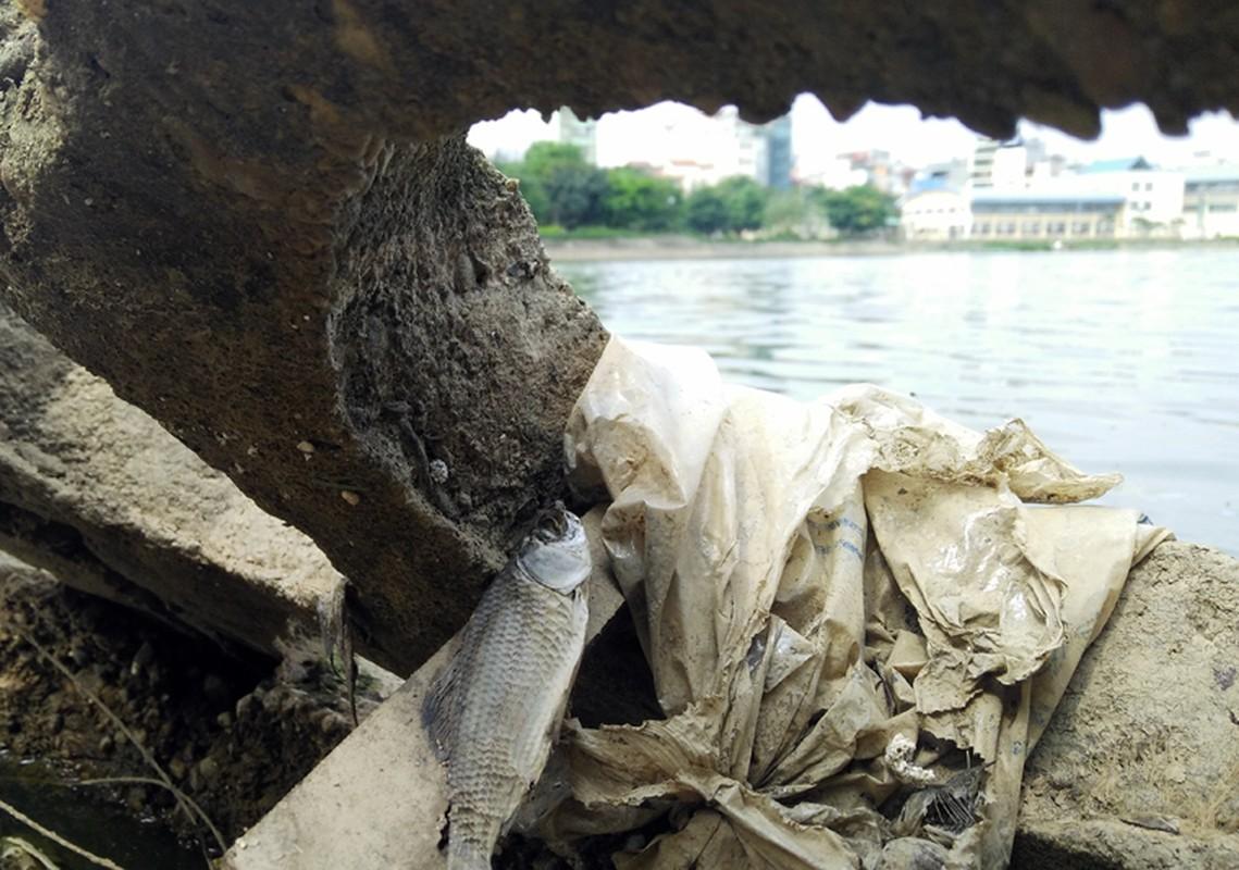 Anh: Kinh hoang canh bat huong va rac ban ngap ho Den Lu - Ha Noi-Hinh-17