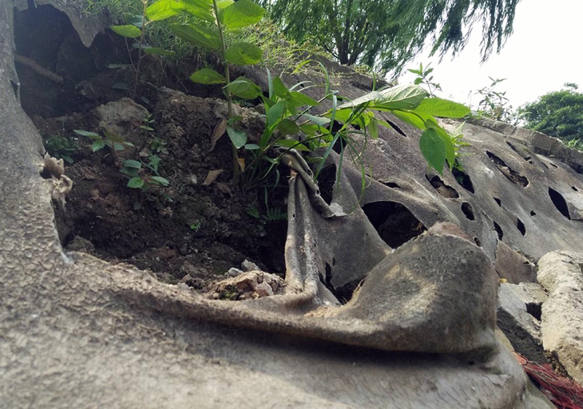 Anh: Kinh hoang canh bat huong va rac ban ngap ho Den Lu - Ha Noi-Hinh-19