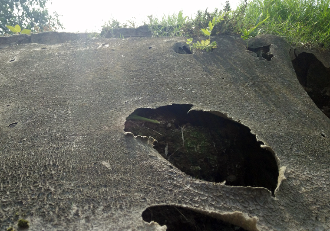 Anh: Kinh hoang canh bat huong va rac ban ngap ho Den Lu - Ha Noi-Hinh-21