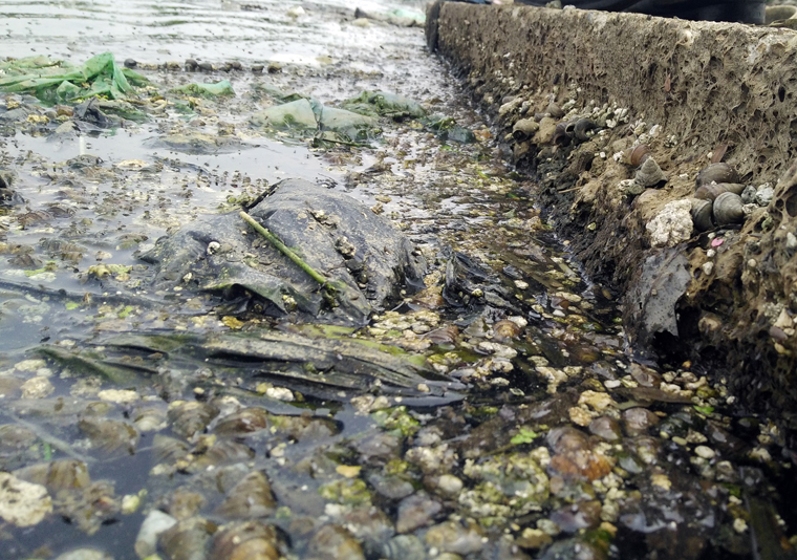 Anh: Kinh hoang canh bat huong va rac ban ngap ho Den Lu - Ha Noi-Hinh-6