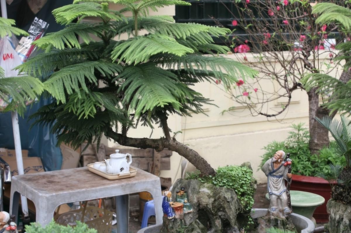 Van tue bonsai choi Tet co truyen gia ca chuc trieu dong/chau-Hinh-11