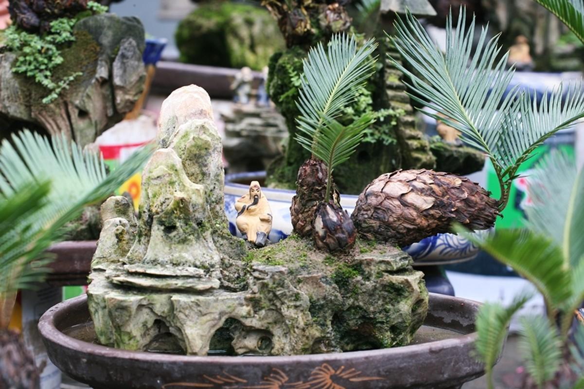 Van tue bonsai choi Tet co truyen gia ca chuc trieu dong/chau-Hinh-3