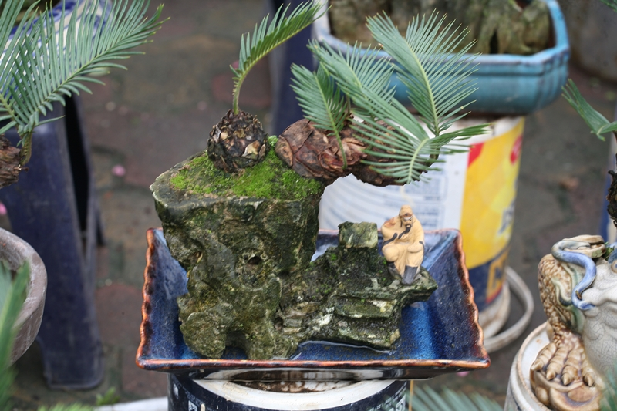 Van tue bonsai choi Tet co truyen gia ca chuc trieu dong/chau-Hinh-7
