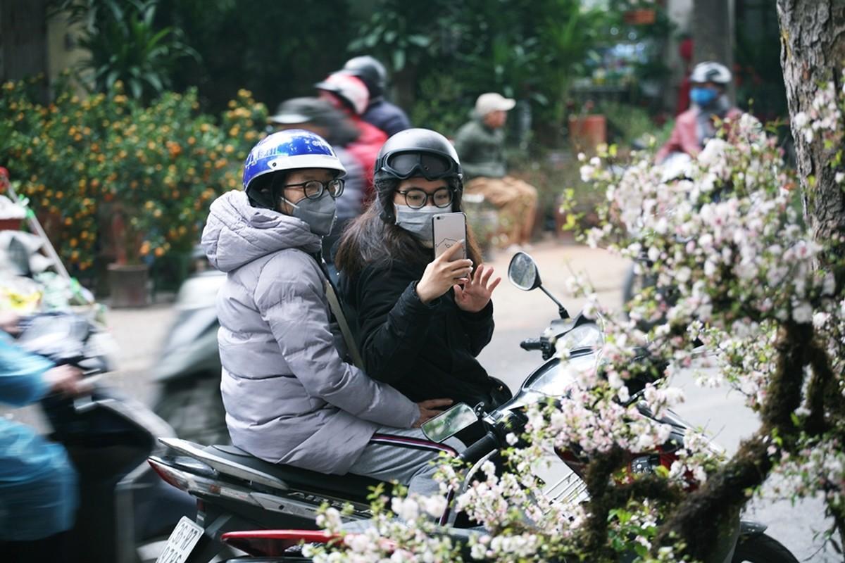 Mai trang boc reu kin than het gia chuc trieu dong/goc o cho hoa Tet Ha Noi-Hinh-12