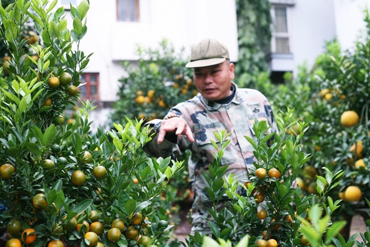 """Doc dao """"trau cong quat"""" xuong pho Ha Noi don Tet-Hinh-10"""
