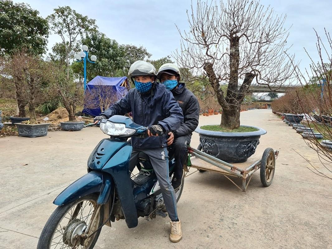 Dao khung gia 100 trieu xuong pho Ha Noi cho khach mua choi Tet-Hinh-13