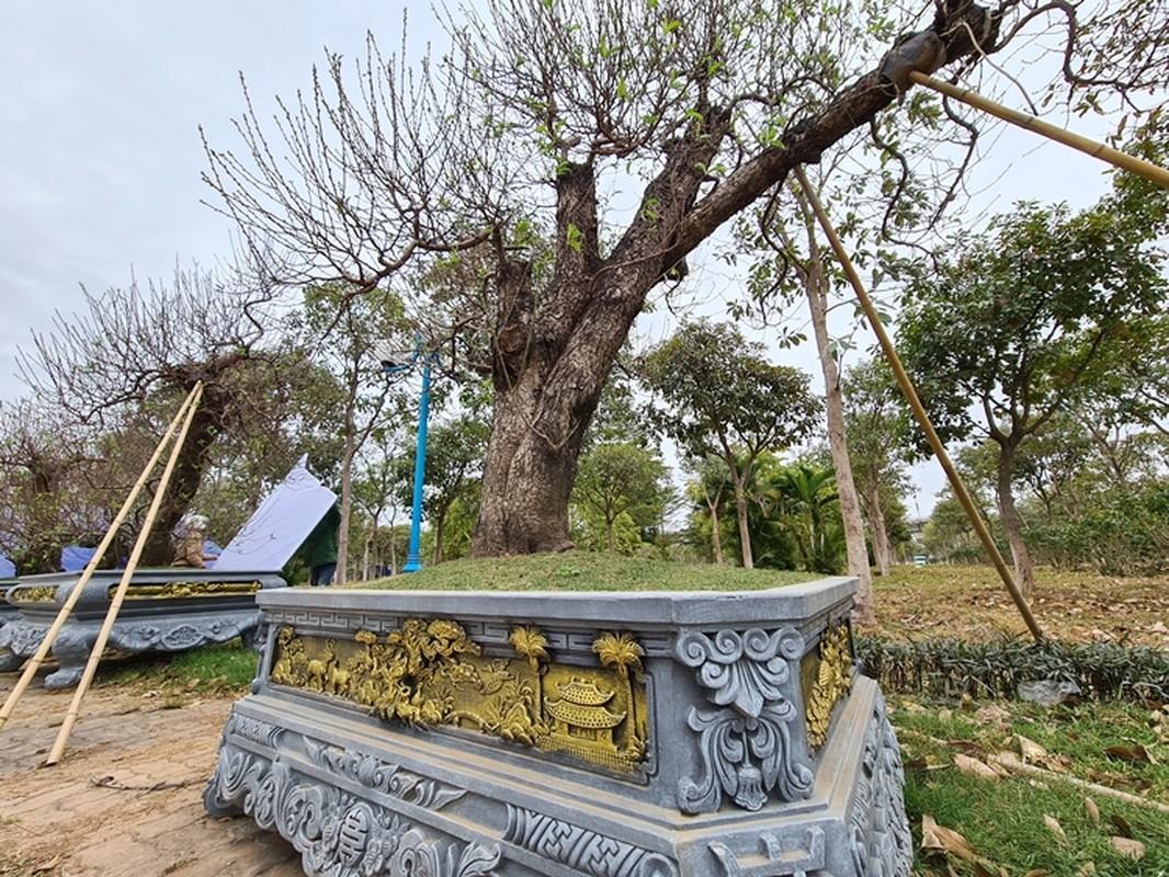Dao khung gia 100 trieu xuong pho Ha Noi cho khach mua choi Tet-Hinh-9