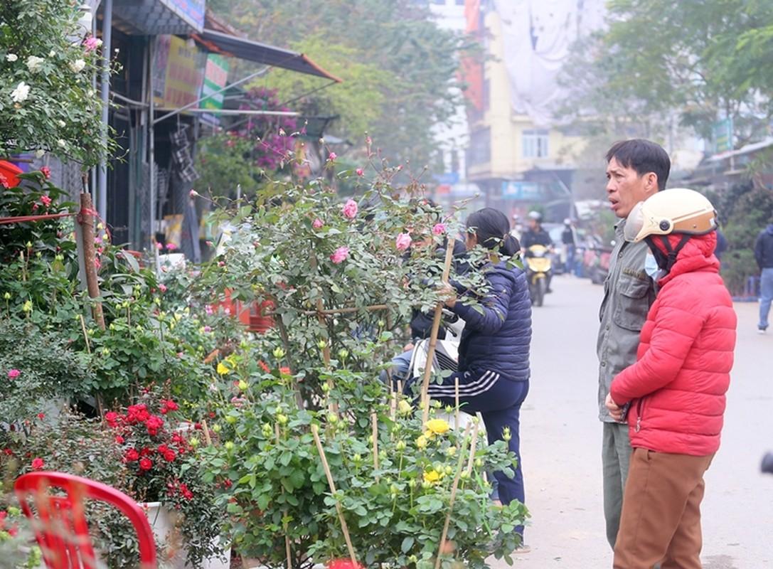 "Nguoi dan Ha Noi ""tranh nhau"" mua cay canh o cho hoa Van Phuc-Hinh-11"