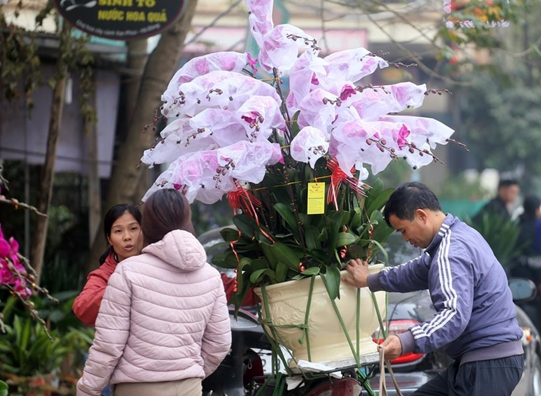 "Nguoi dan Ha Noi ""tranh nhau"" mua cay canh o cho hoa Van Phuc-Hinh-13"