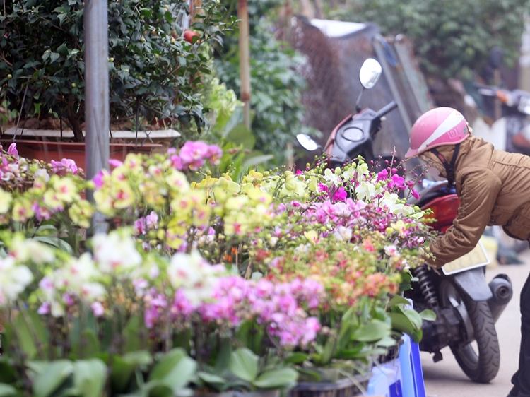 "Nguoi dan Ha Noi ""tranh nhau"" mua cay canh o cho hoa Van Phuc-Hinh-3"