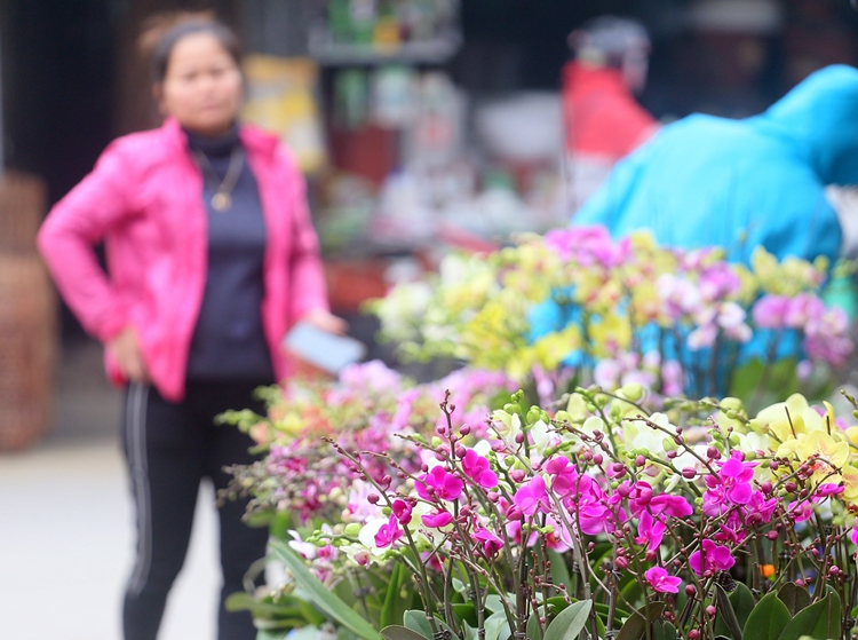 "Nguoi dan Ha Noi ""tranh nhau"" mua cay canh o cho hoa Van Phuc-Hinh-4"