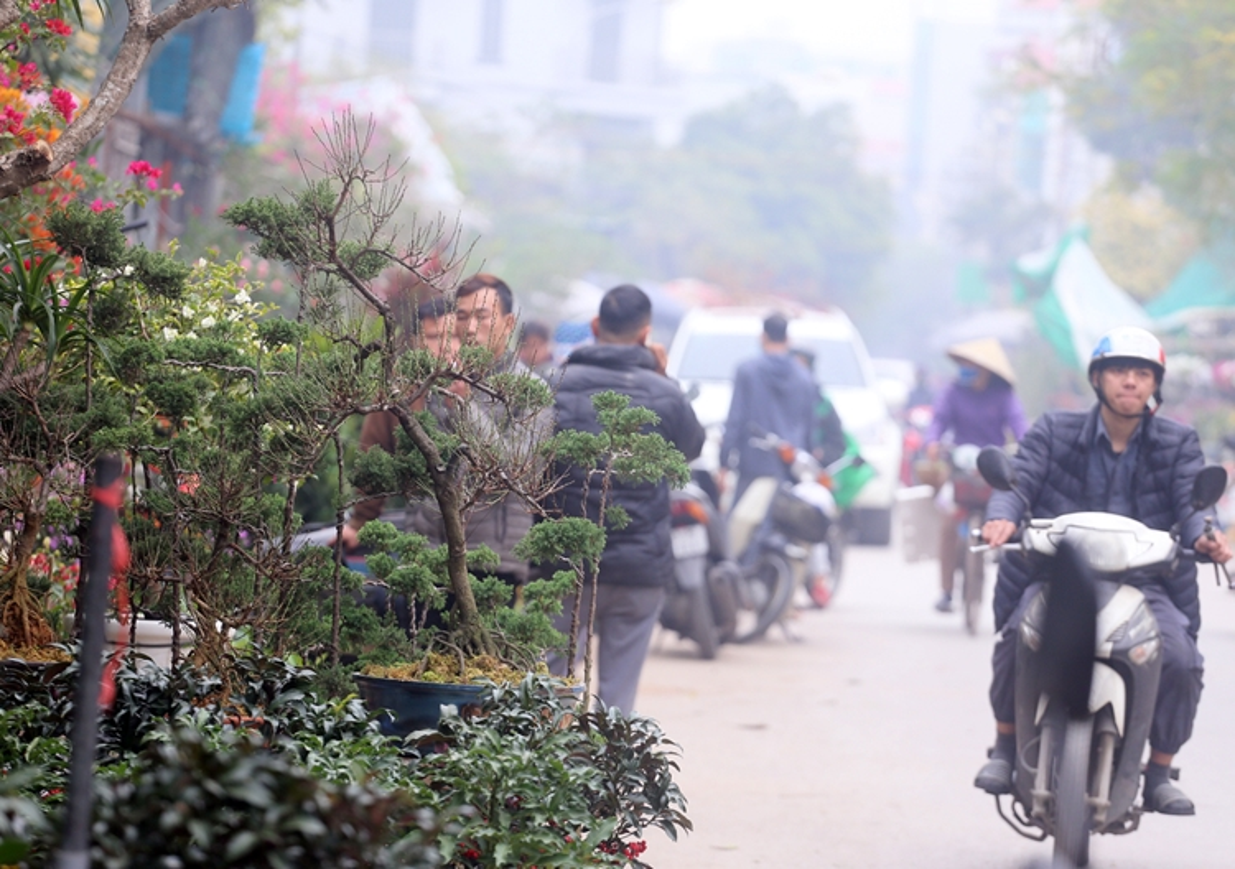 "Nguoi dan Ha Noi ""tranh nhau"" mua cay canh o cho hoa Van Phuc-Hinh-9"