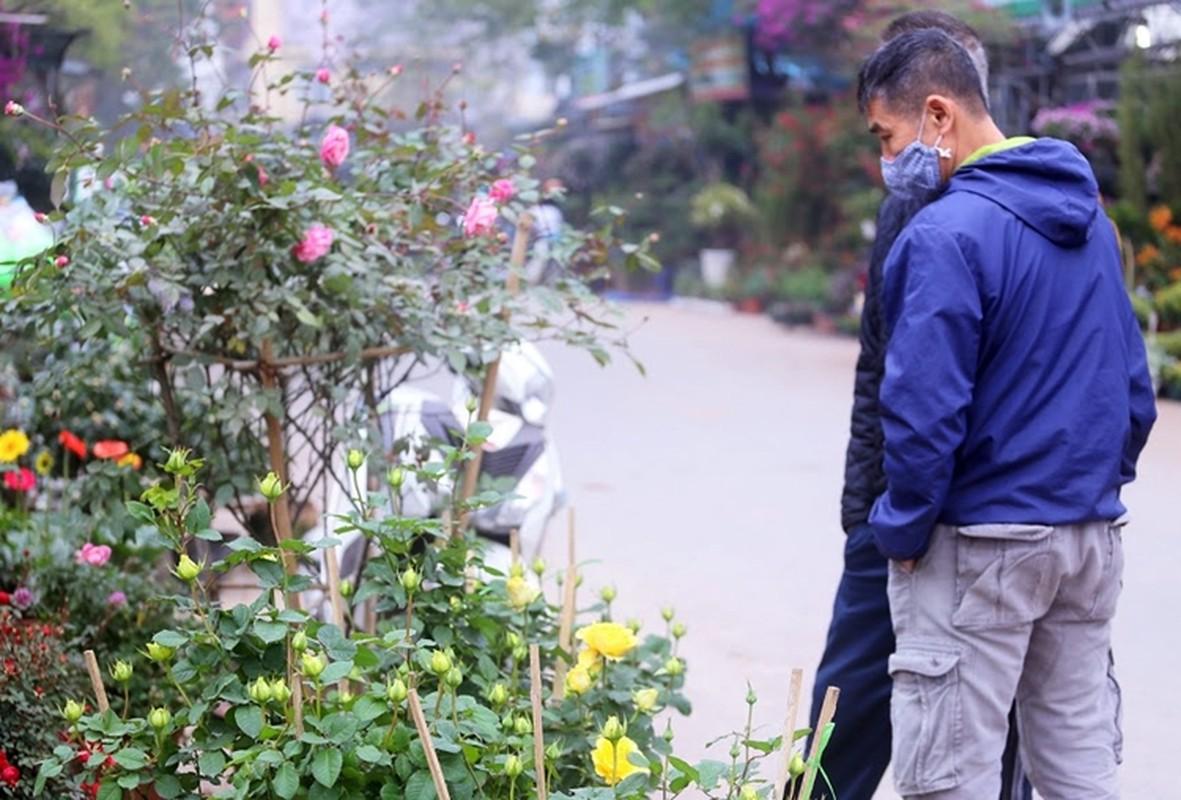 Hoa hong du mau sac so, gia 500 nghin dong/chau hut khach choi Tet-Hinh-12
