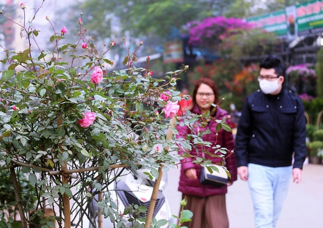 Hoa hong du mau sac so, gia 500 nghin dong/chau hut khach choi Tet-Hinh-13