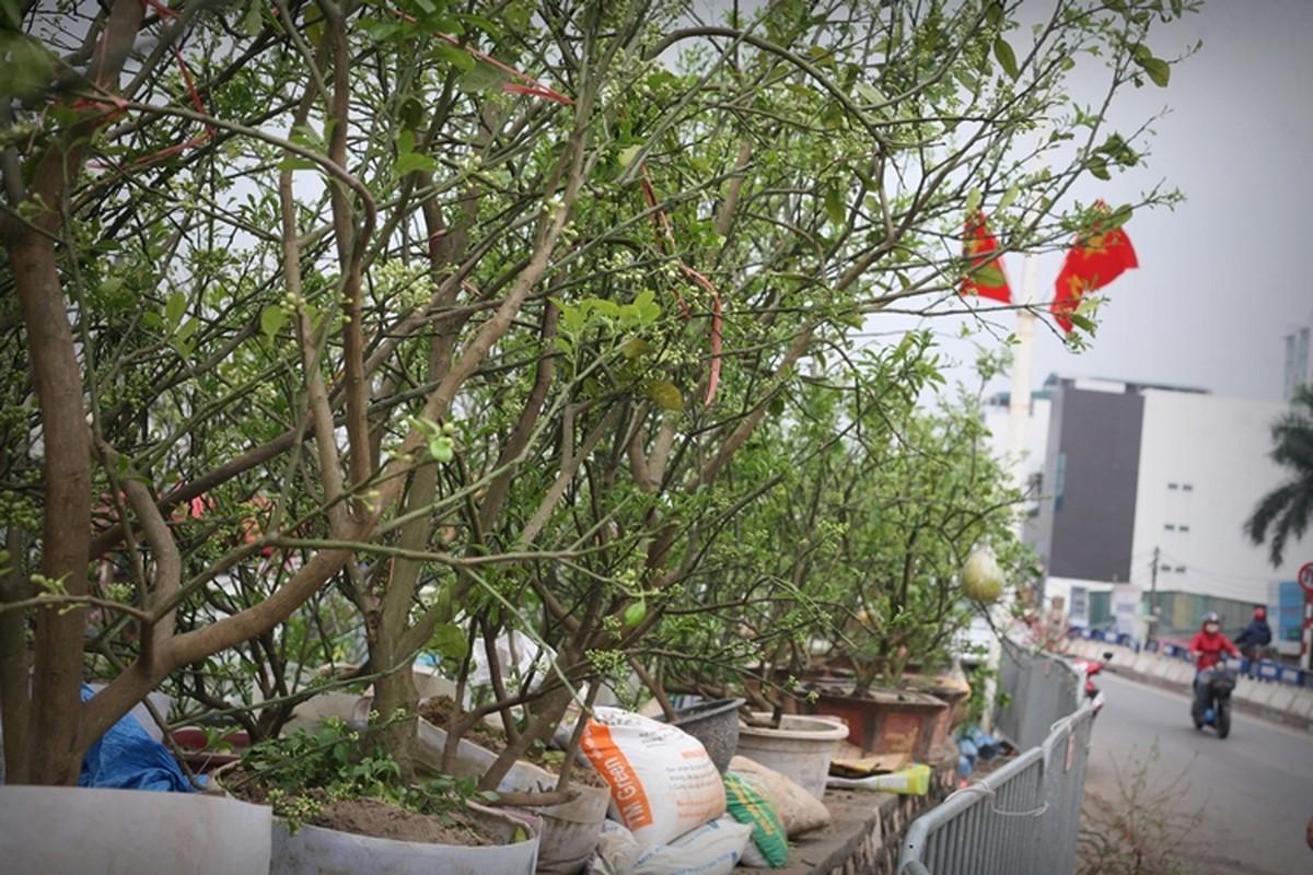 Ha Noi: Buoi canh day nu dat hang sau Tet-Hinh-2