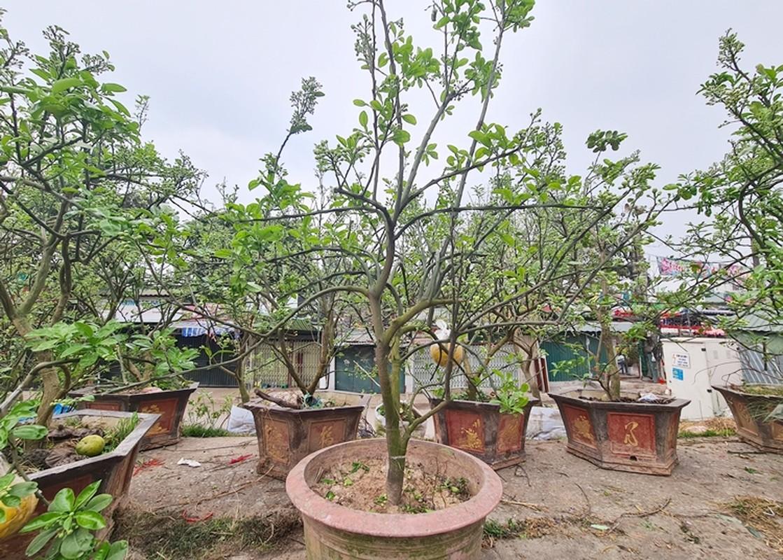 Ha Noi: Buoi canh day nu dat hang sau Tet-Hinh-5