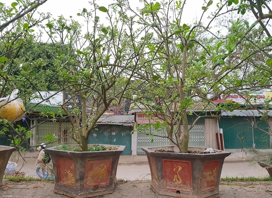 Ha Noi: Buoi canh day nu dat hang sau Tet-Hinh-6