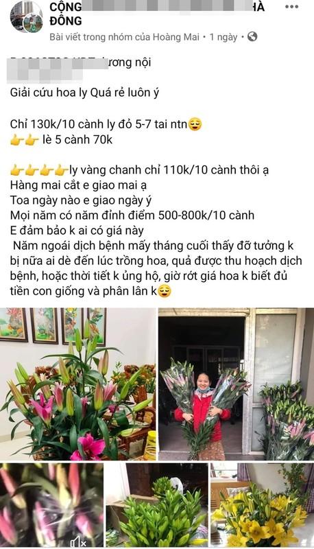 Hoa ly rot gia the tham, bay ban la liet o via he Ha Noi-Hinh-8