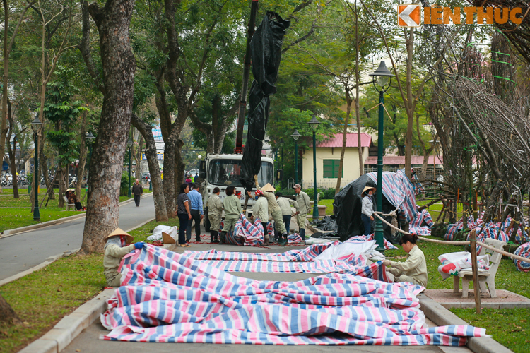 Can canh cham soc hoa anh dao Nhat Ban ve Ha Noi-Hinh-11
