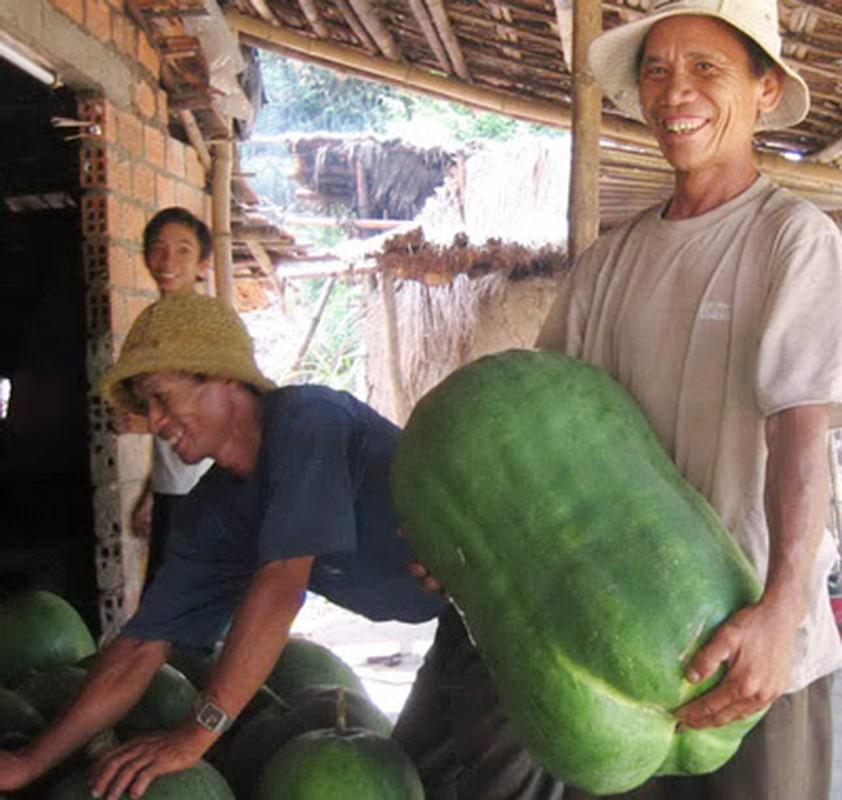 Cac loai quai qua khong lo sot xinh xich-Hinh-2