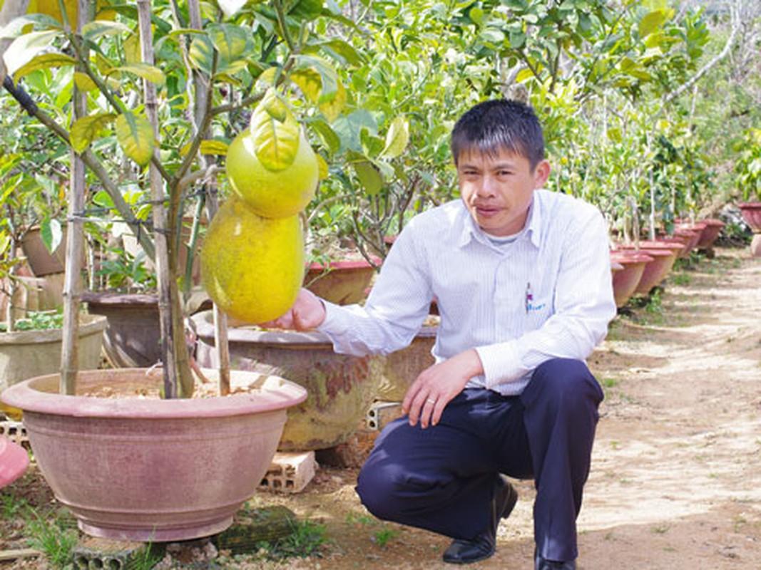 Cac loai quai qua khong lo sot xinh xich-Hinh-8