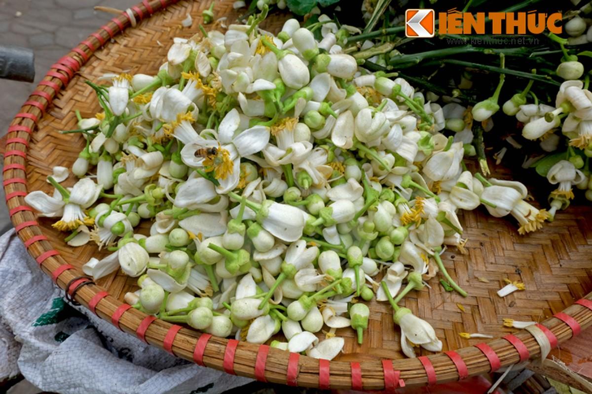 Anh: Nong nan hoa buoi ngat huong pho Ha Noi-Hinh-10